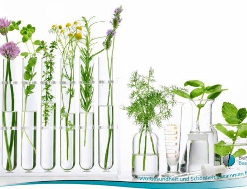 Gesundheit: Phyto-Energetik