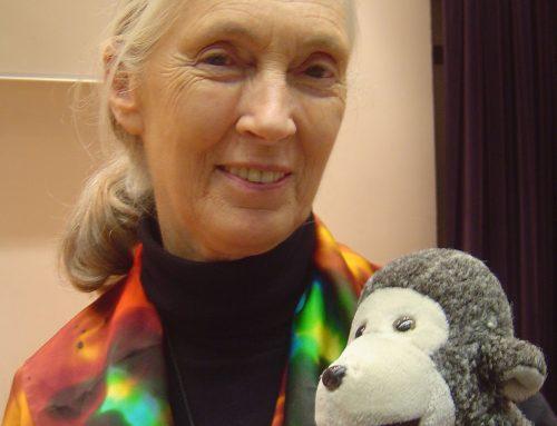 Jane Goodall: lasst uns die richtige Entscheidung treffen